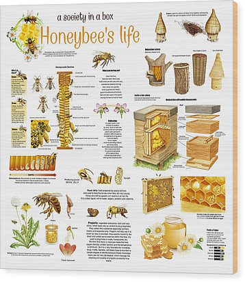 Honey Bees Infographic Wood Print