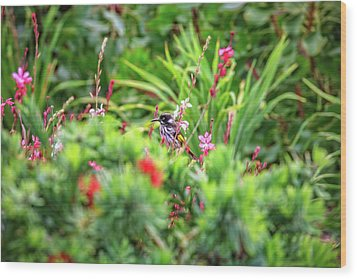 Wood Print featuring the photograph Honey Eater, Bushy Lakes by Dave Catley