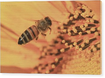 Wood Print featuring the photograph Honeybee And Sunflower by Chris Berry