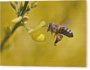 Honeybee Apis Mellifera Wood Print