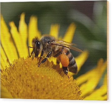 Wood Print featuring the photograph Honeybee At Work by Rona Black