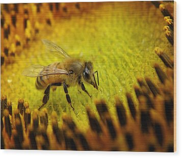 Wood Print featuring the photograph Honeybee On Sunflower by Chris Berry