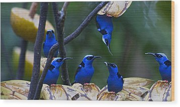Honeycreeper Wood Print by Betsy Knapp