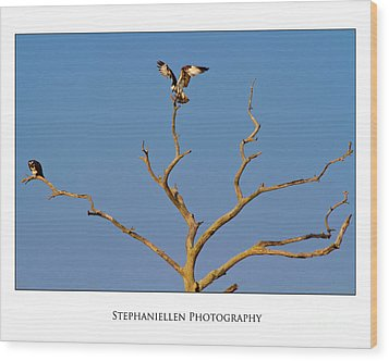 Honeymoon Osprey Wood Print by Stephanie Hayes