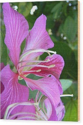 Hong Kong Orchid In Lakeland Wood Print by Warren Thompson
