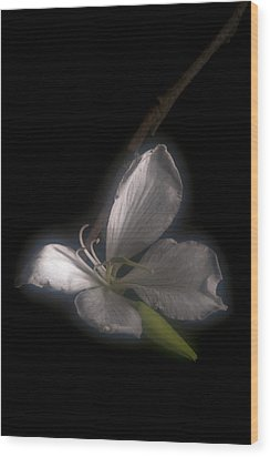 Hong Kong Orchid Wood Print by Lou  Novick