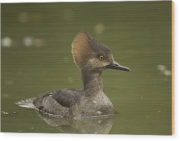 Hooded Merganser Wood Print by Doug Herr