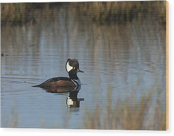Hooded Merganser In The Early Morning Light Wood Print