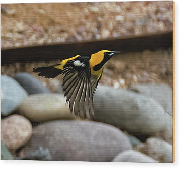 Wood Print featuring the photograph Hooded Oriole H37 by Mark Myhaver