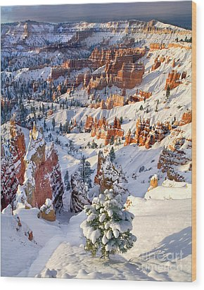Wood Print featuring the photograph Hoodoos And Fir Tree In Winter Bryce Canyon Np Utah by Dave Welling
