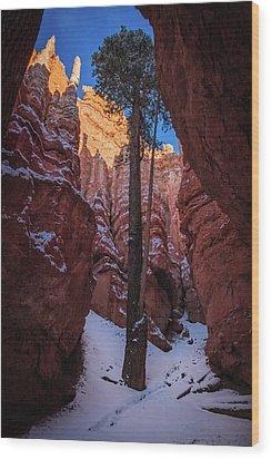 Hoodoos Of Bryce Wood Print by Edgars Erglis