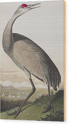 Hooping Crane Wood Print by John James Audubon