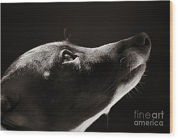 Wood Print featuring the photograph Hopeful by Angela Rath