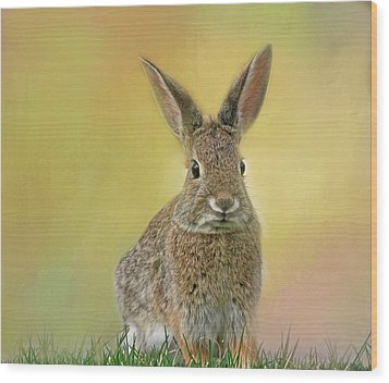 Wood Print featuring the photograph Hoppy Spring by Donna Kennedy