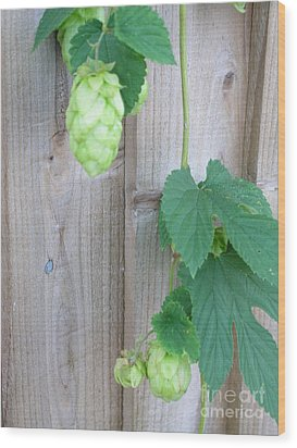 Hops On Fence Wood Print