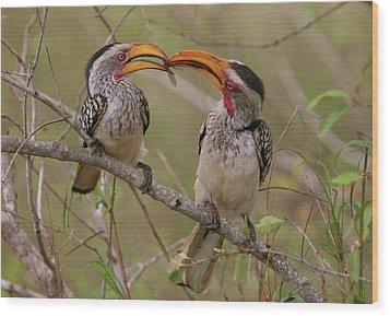 Hornbill Love Wood Print by Bruce J Robinson