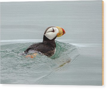 Wood Print featuring the photograph Horned Puffin by Phil Stone