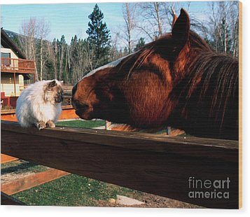 Horse And Cat Nuzzle Wood Print by Thomas R Fletcher