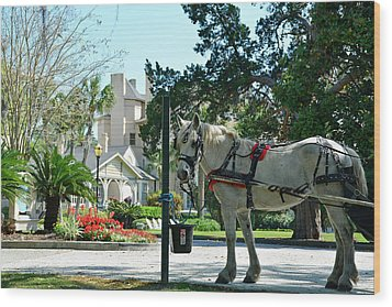 Horse And Jekyll Lsland Club Hotel Wood Print by Bruce Gourley