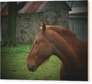 Horse And Shed Wood Print by Michael L Kimble