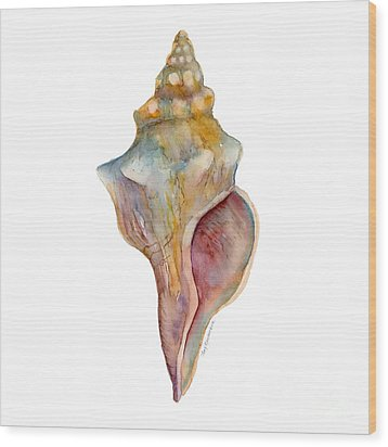 Horse Conch Shell Wood Print