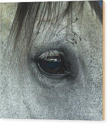Horse Eye Wood Print by John Greim