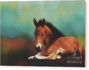 Horse Foal Wood Print