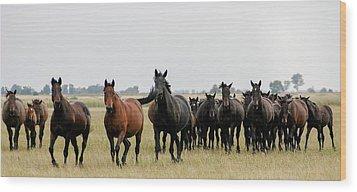 Horse Herd On The Hungarian Puszta Wood Print