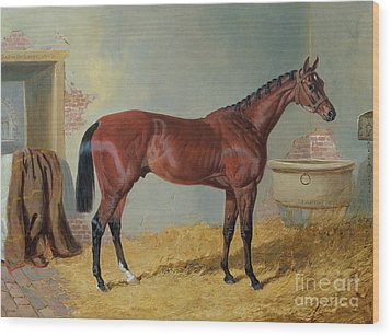 Horse In A Stable Wood Print by John Frederick Herring Snr