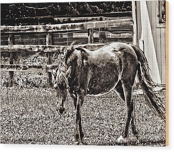 Horse In Black And White Wood Print by Annie Zeno