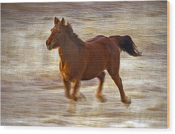 Horse In Motion Wood Print by James Steele