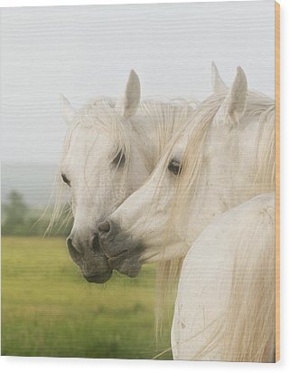 Horse Kiss Wood Print by ELA-EquusArt