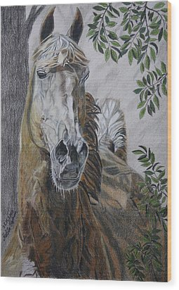 Horse Wood Print by Melita Safran