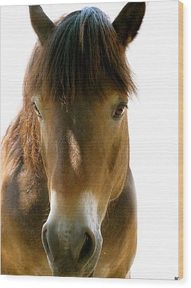 Horse Of Course Wood Print