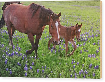 Horse On Bluebonnet Trail Wood Print by David Hensley