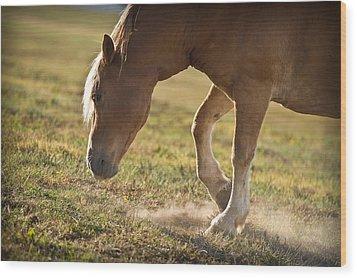 Horse Pawing In Pasture Wood Print by Steve Gadomski