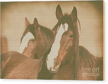Wood Print featuring the photograph Horse Portrait by Ana V Ramirez