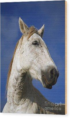 Horse Portrait Wood Print by Gaspar Avila