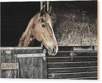 Wood Print featuring the photograph Horse Profile In The Stable by Marion McCristall