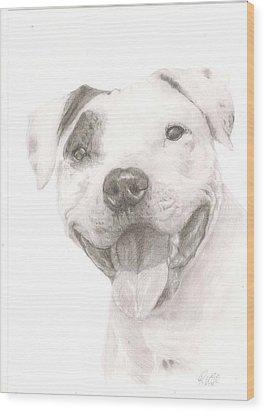Pitbull  Wood Print by Rebecca Vose