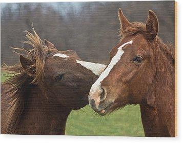 Horse Whisperer Wood Print by Mamie Thornbrue
