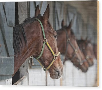 Horses For Sale Wood Print by Brian Mollenkopf