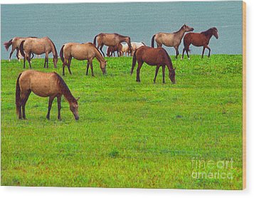 Horses Graze By Seaside Wood Print by Thomas R Fletcher
