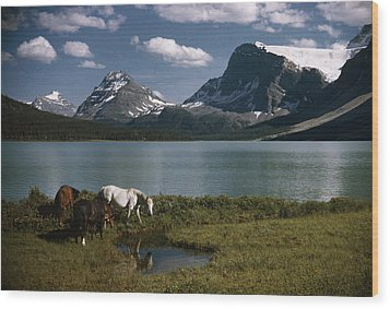Horses Graze In A Lakeside Meadow Wood Print by Walter Meayers Edwards