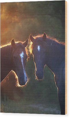 Horses In The Early Morning Wood Print