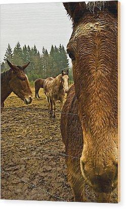 Horses In The Rain Wood Print by Dale Stillman