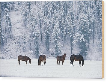 Horses In The Snow Wood Print by Alan and Sandy Carey and Photo Researchers