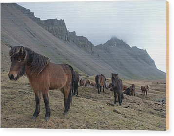 Wood Print featuring the photograph Horses Near Vestrahorn Mountain, Iceland by Dubi Roman