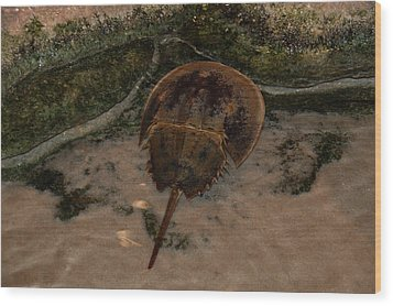 Wood Print featuring the photograph Horseshoe Crab by Kathleen Stephens