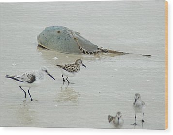 Wood Print featuring the photograph Horseshoe Crab With Migrating Shorebirds by Richard Bryce and Family